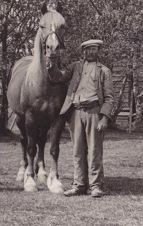 Hampe med hästen